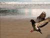 Merpati Landing